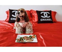 پاپی لند ، کلیه خدمات مربوط به سگ و حیوانات خانگی